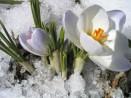 hivers-printemps